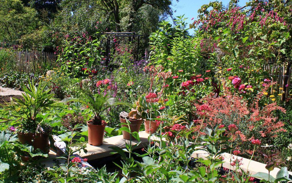 Le jardin de brigitte alsace un petit tour - Comment supprimer le liseron au jardin ...