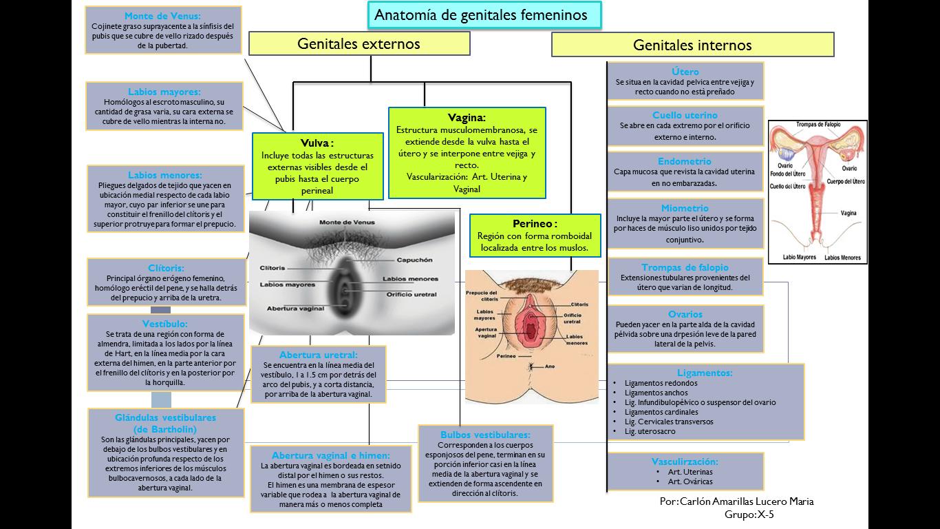 Ginecologia y Obstetricia: Anatomia de los Genitales externos Femeninos