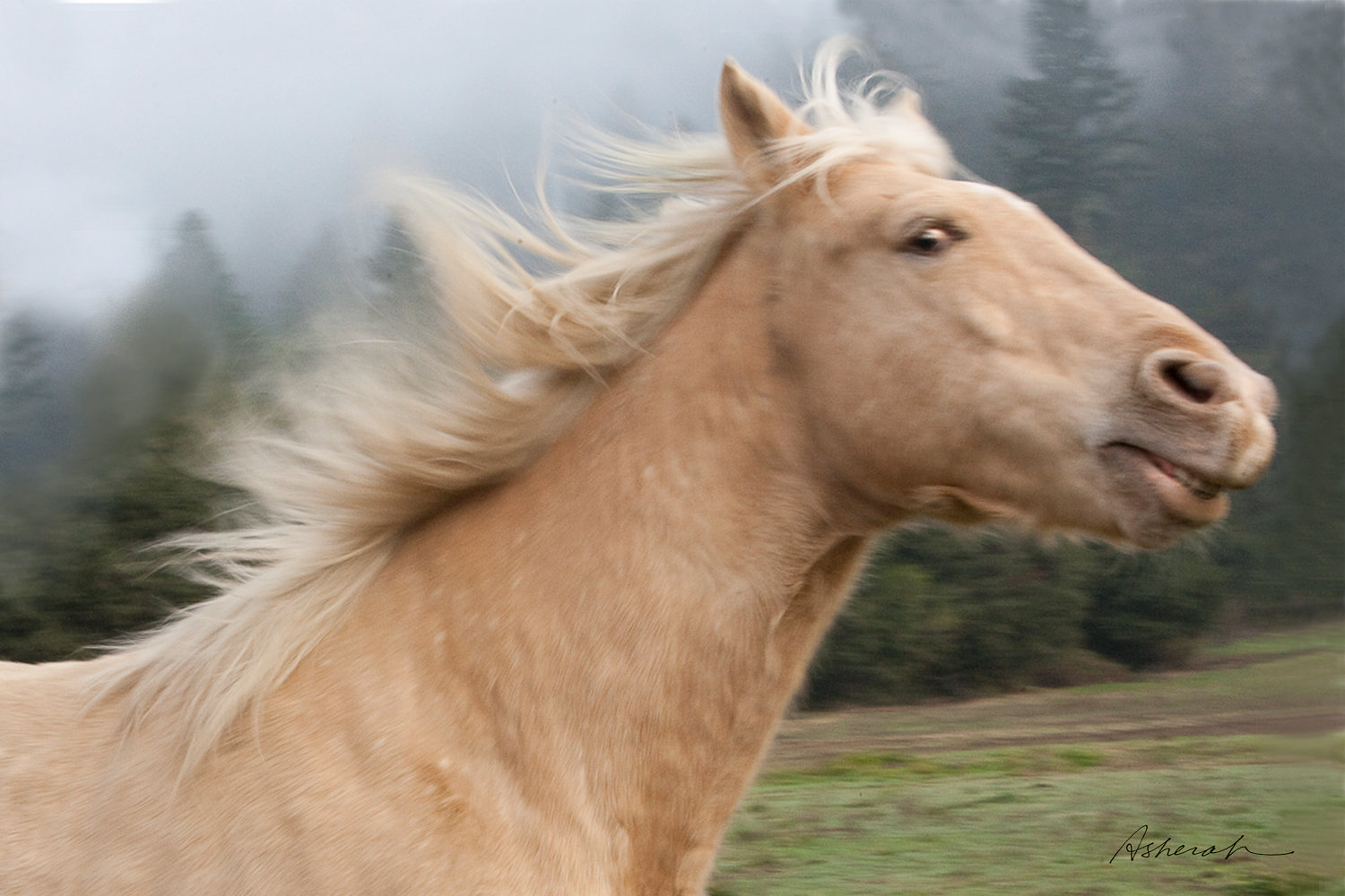 Funny Horse Face 2012 | Funny Animals