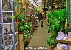 Marche aux fleurs flower market paris