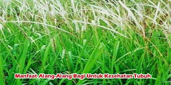 Manfaat Alang-Alang