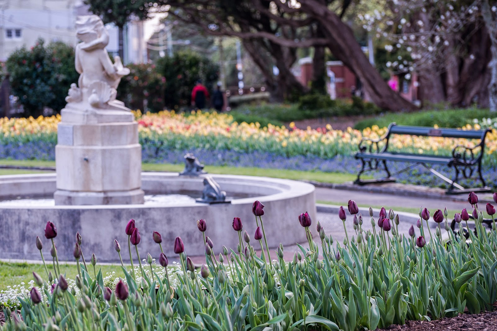 fountain purple tulips wellington gardens