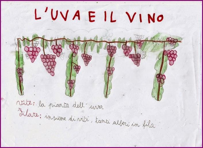 Exceptionnel Studiamando liberamente: L'uva ed il vino LK75