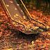 Nostalgia de Outono