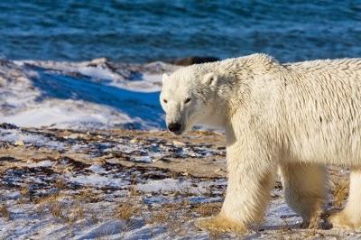 Implicaciones geopolíticas del cambio climático