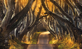 The Dark Hedges, Irlandia Utara