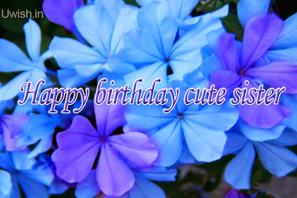 Happy Birthday Cute Sister e greetings and wishes with purple and blue flowers.