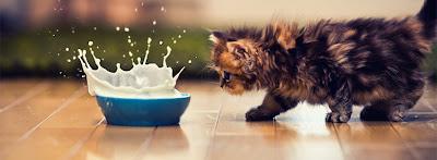 Capa para Facebook Animais Gato