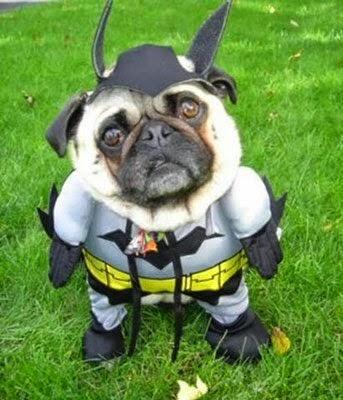 perro pug disfrazado de batman