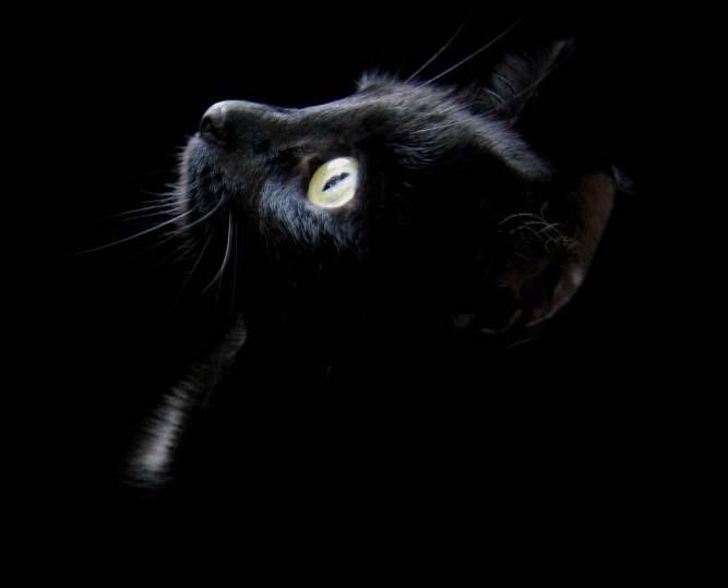 El silencio mas triste del mundo - Página 2 Black_cat_head_1024x768-236981