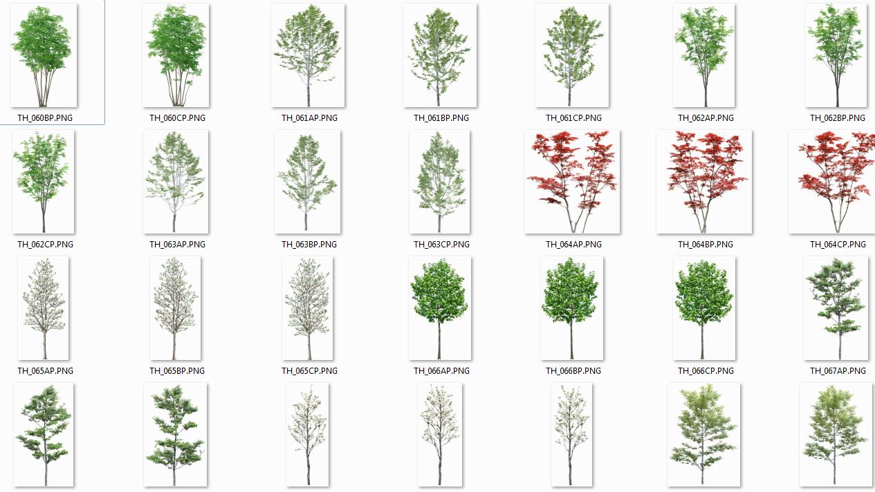 Colecci n de rboles con fondo transparente png arq - Arboles y arbustos ...