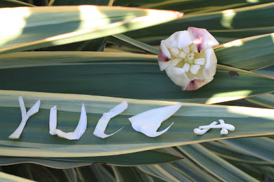 Yucca Spelled With Blossom Parts