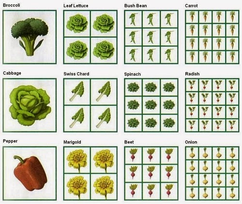 Permaculture and Regenerative Agriculture: Square Foot Garden spacing