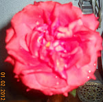 Uma Rosa minha!!