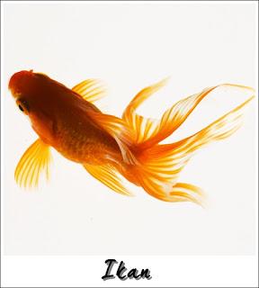 Verterbrata ikan