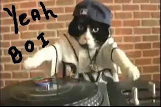 funny cat picture cat rapper