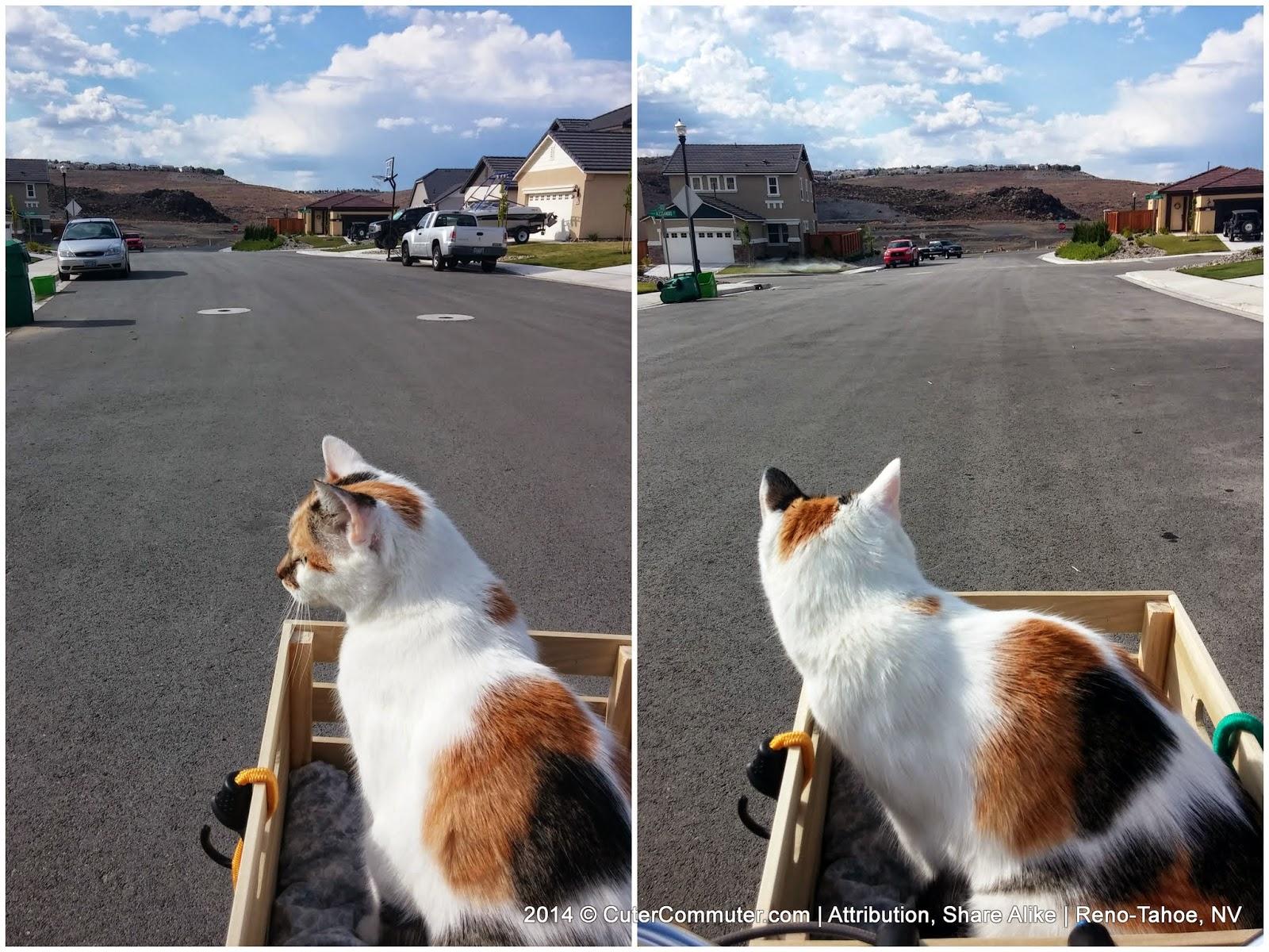 cat on a bike ride