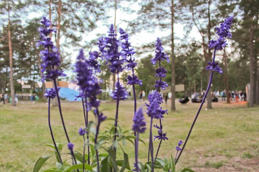 2012, camping, cecile torp,  hipstersquad, hove, hovefestivalen, inspirasjon, inspiration, flowers