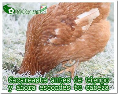 Cargadas Albiverdes - Gallina de Blooming con la cabeza bajo tierra