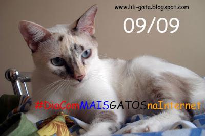 Banner de divulgação do Dia com MAIS GATOS na Internet - Edição 2012