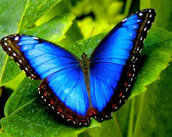 Imagenes de mariposas de colores reales imagui - Imagenes de mariposas de colores ...