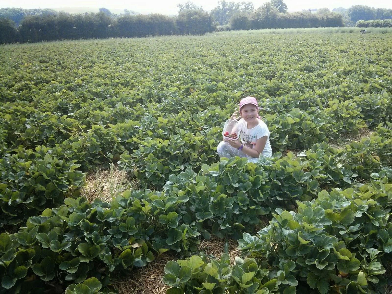 Top Ender picking Strawberries