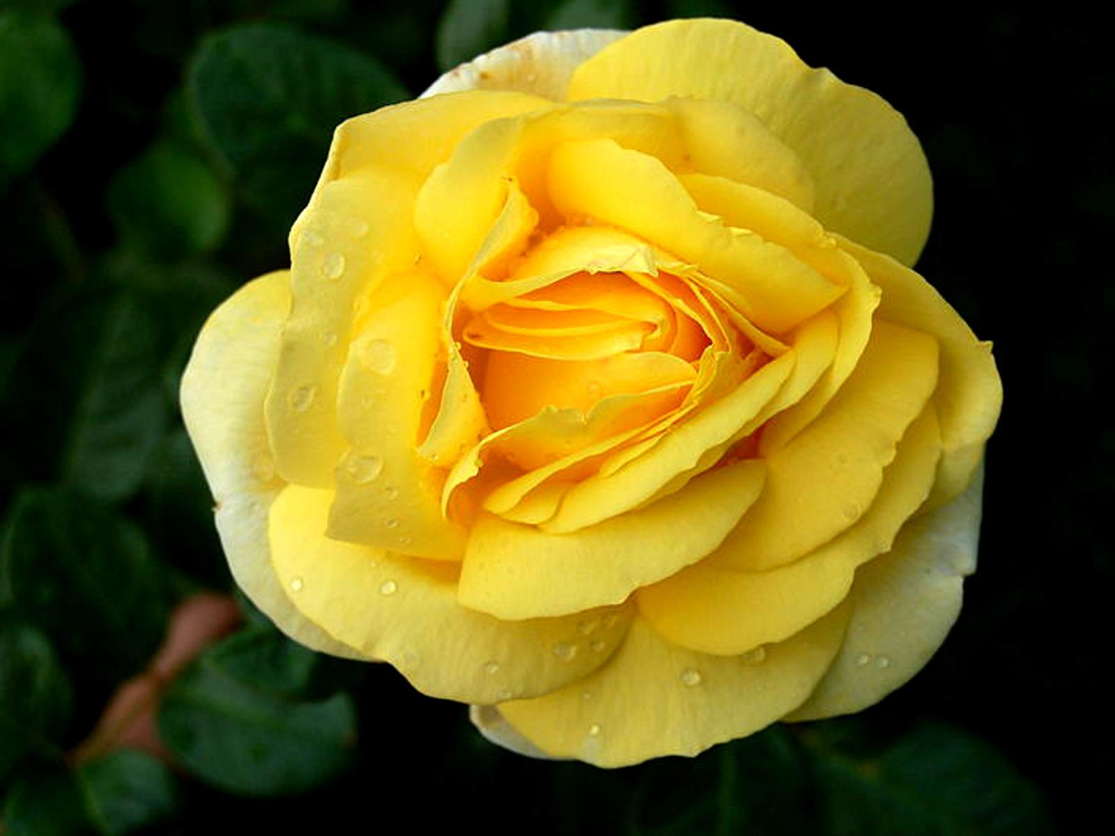 imágenes-bonitas-fotos-gratis-muy-lindas-para-compartir-en-facebook