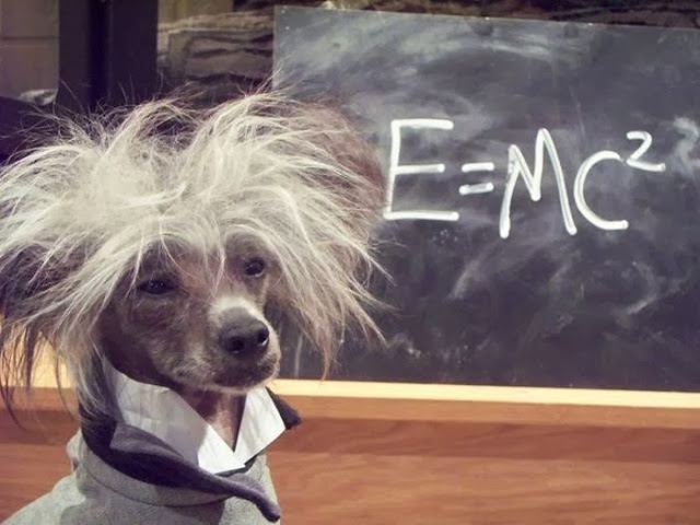 Funny animals of the week - 20 December 2013 (40 pics), funny dog looks like Albert Einstein