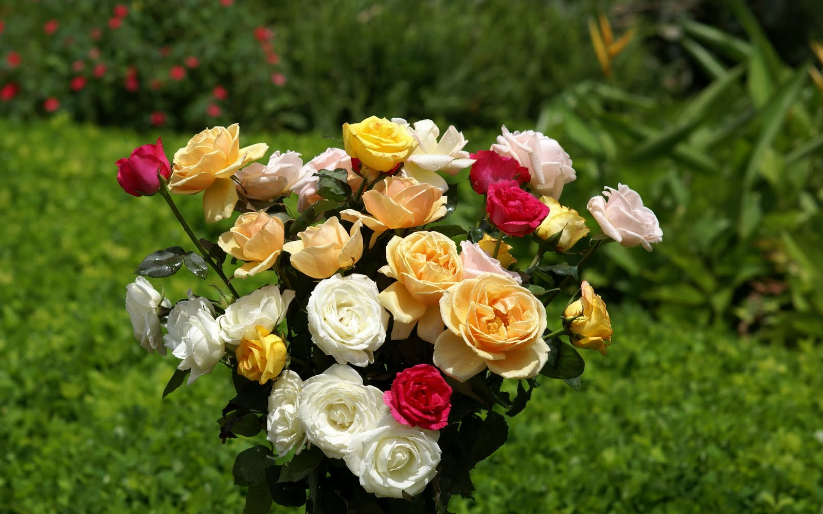 "Fairy Land Fresh Flowers Fairy Land Beautiful Roses ""Wallpaper"" 4"