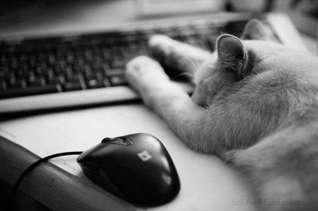 Кот устал и лежит возле компьютера