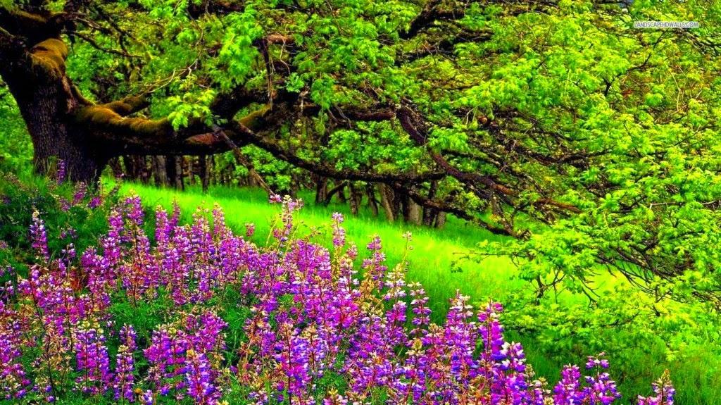 ảnh đẹp thiên nhiên mới nhất