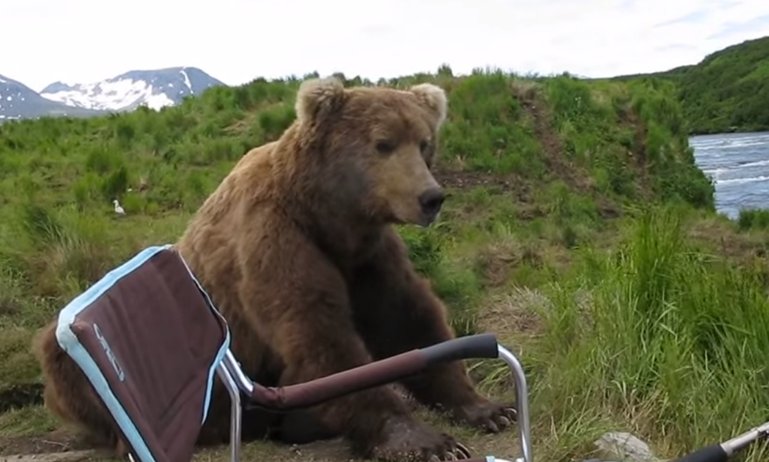 The brown bear sits down. - A Brown Bear Sat Down Right Next To Him While He Filmed It All!