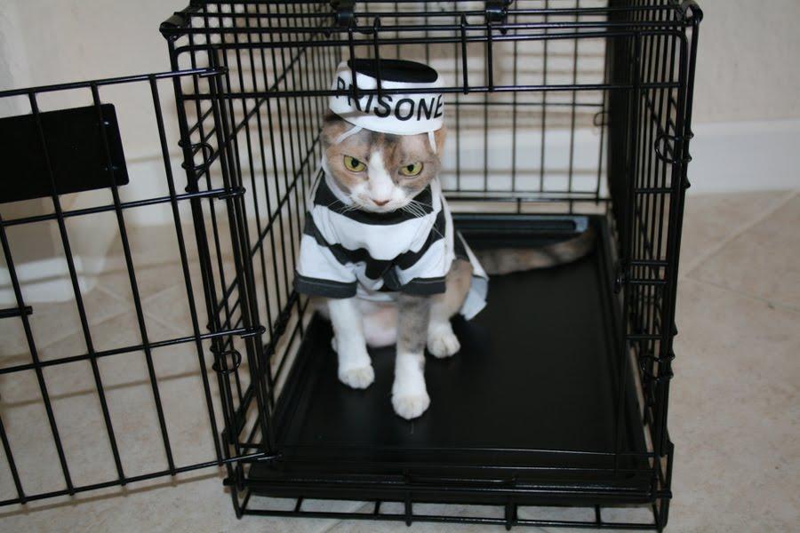 Prisoner Get Cat D Early How