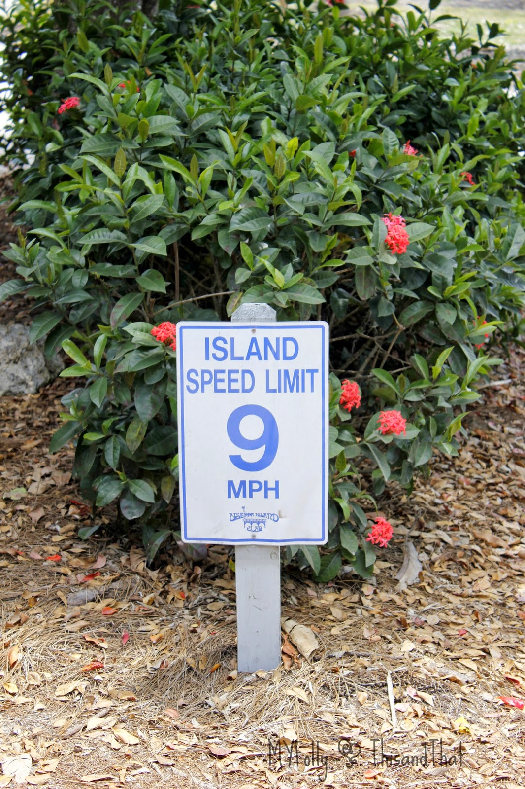 Cruise to Useppa Island/This and That #Vacation #VisitFlorida #Cruise