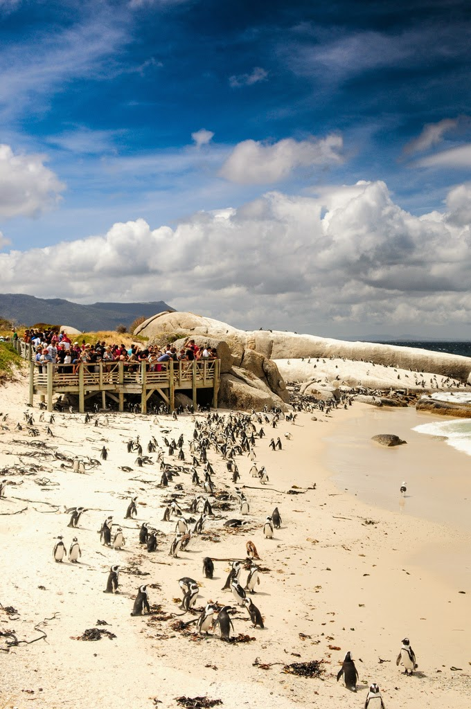 Foxy Beach, Simon's Town, Cape Town is Africa's Miracle