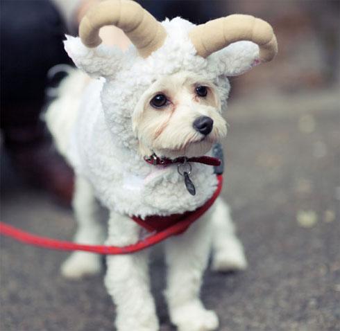 Lindisima Blog Disfraces Para Perros