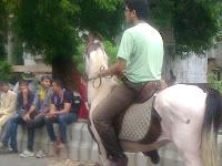 marwari horse ahmedabad rath yatra