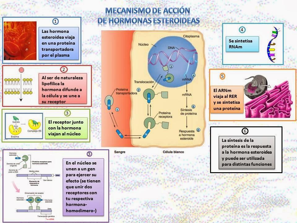 Blog de Fisiología Básica de Rogelio Eduardo Enriquez