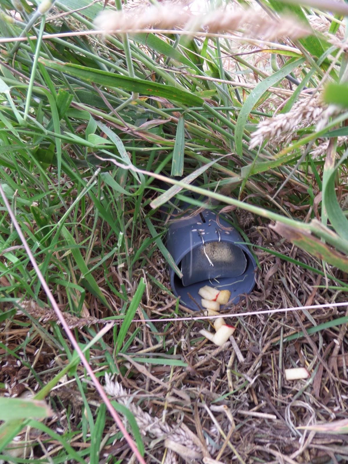 Mosspig glasgow 39 s fossorial water voles - Volle trap ...