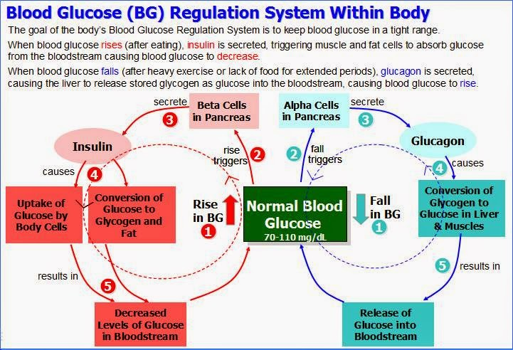 Blood Glucose Regulation System Death To Diabetes Reverse