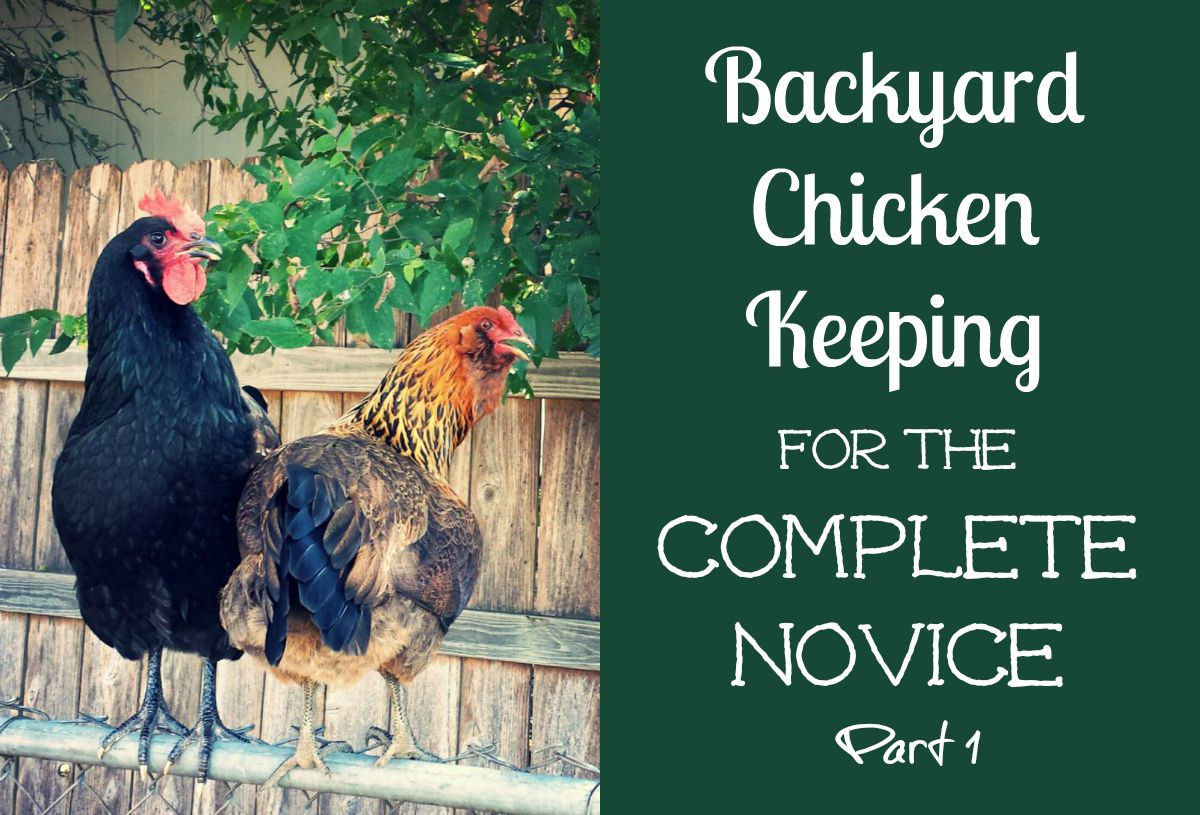 reviews chews u0026 how tos backyard chicken keeping for the