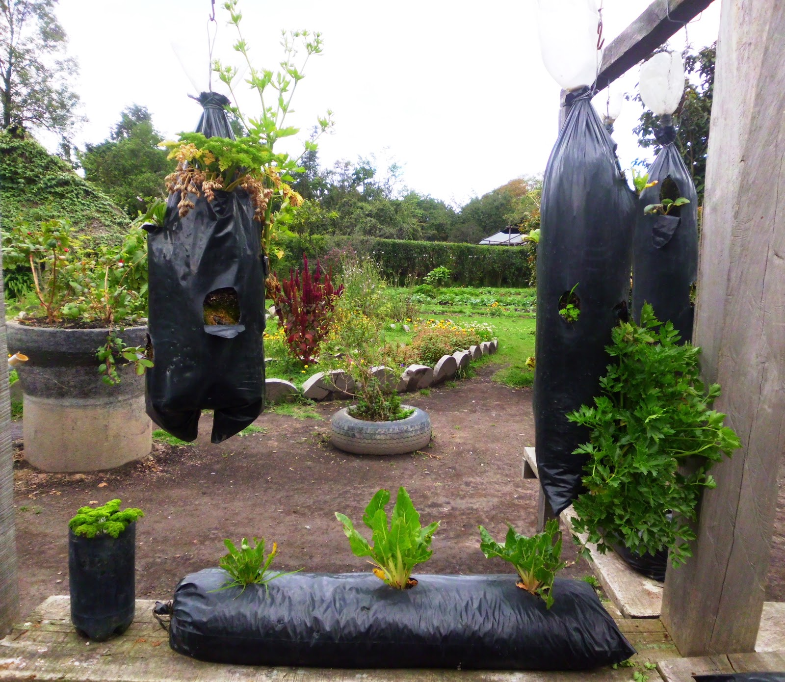 El jardin de c ndida c mo cultivar hortalizas org nicas for Como cultivar hortalizas