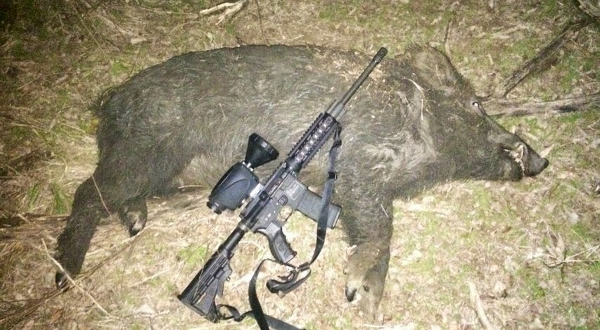 feral hog shot with a thermal scope from ww.x20.org
