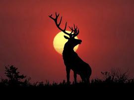 Soy el fértil señor de los bosques mio el reinado del año menguante