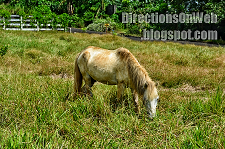 small horse at albay park & wildlife