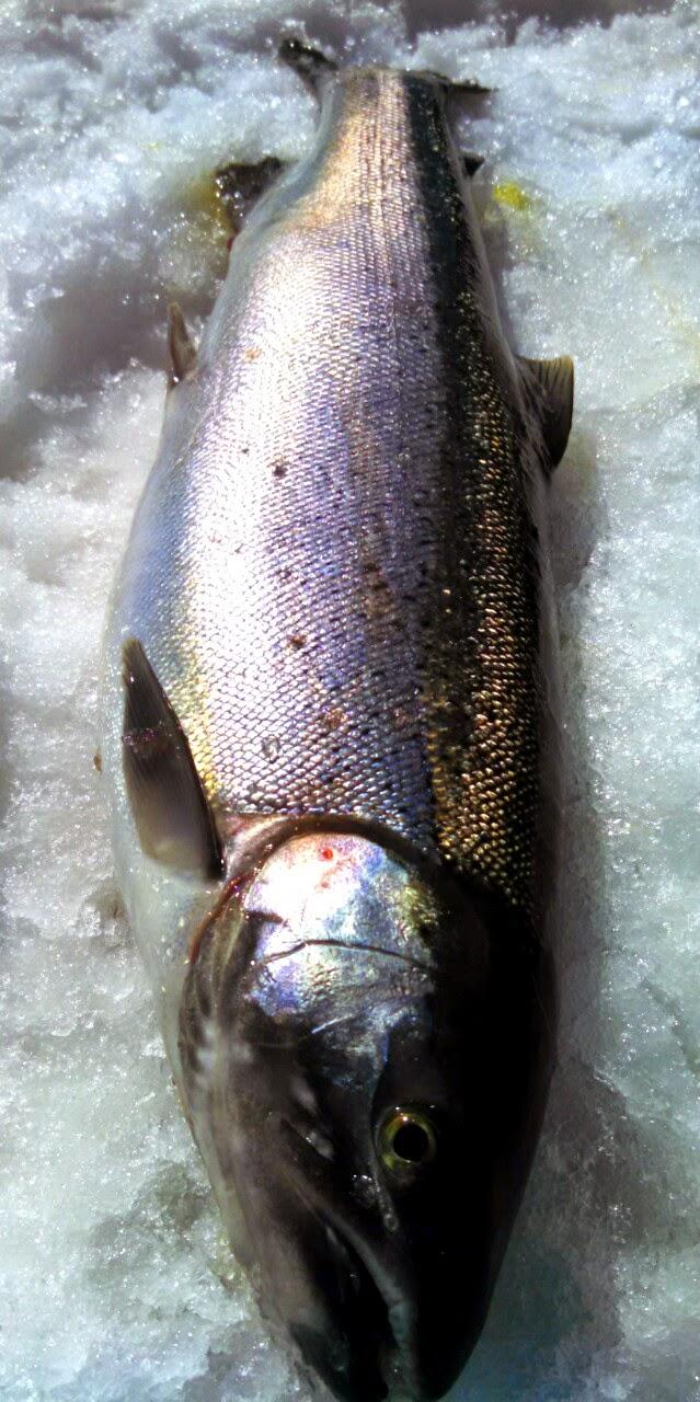 Wisconsin fishing reports steelhead report for Kewaunee fishing report
