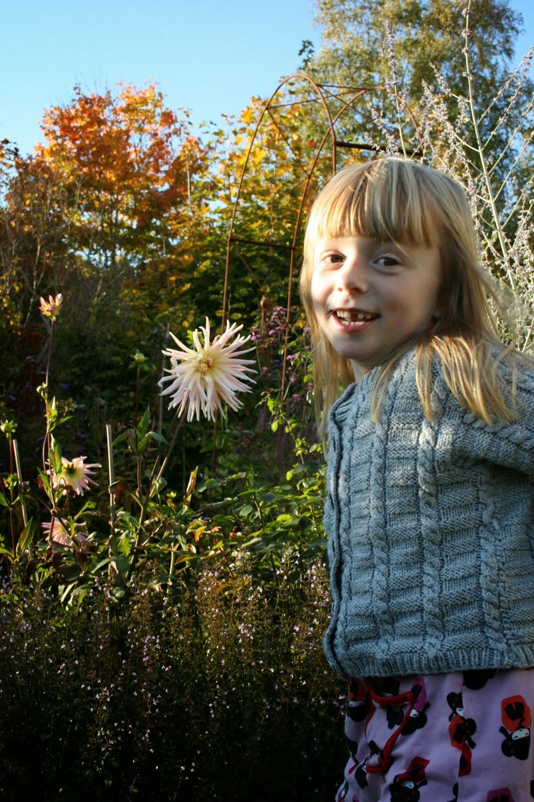 Kejsarkrona Fritillaria imperialis