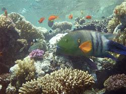 Bilder  der  Hobby- Unterwasserfotografin  Gabriele Lübke