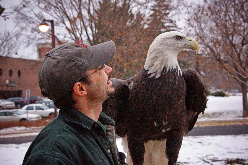 The Raptor Center: Update from Maxime the Bald Eagle on TRC\'s ...