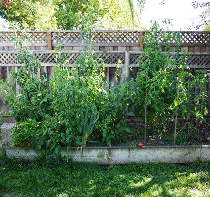 August garden 2013